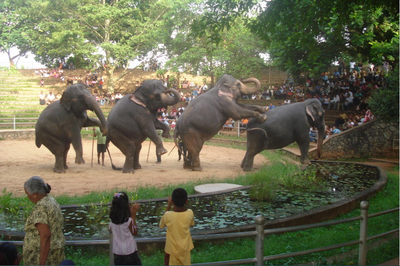 Sri Lanka, Colombo, Dehiwala Zoo