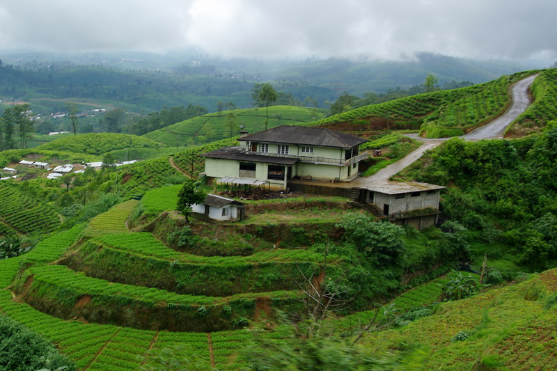 Sri Lanka, Tea plantations