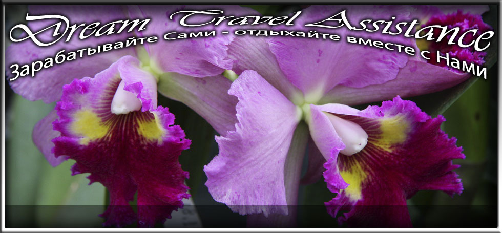 Cattleya, Blc. Lucky Strike